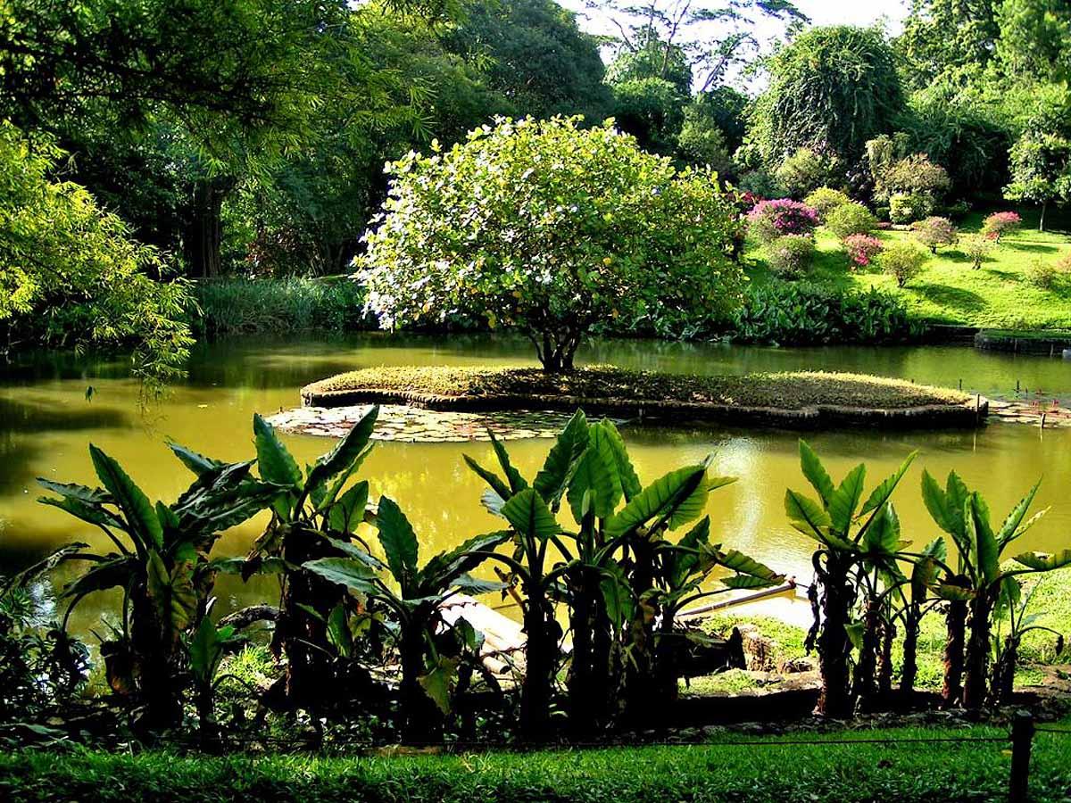 Botanic Garden, Sri-Lanka