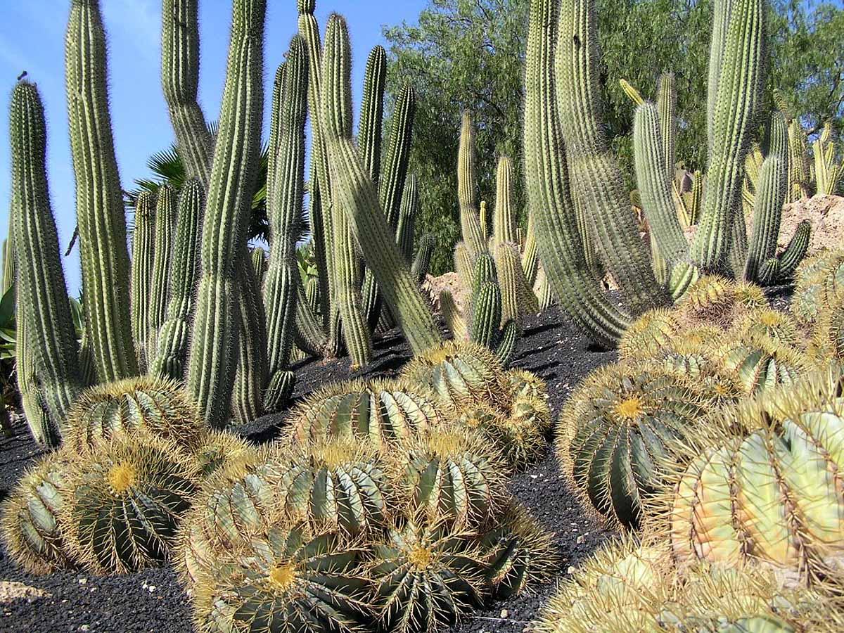 Cactus garden at Exotic park Arona