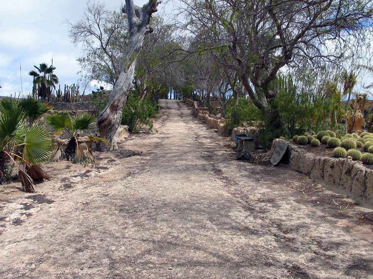 Cactus park, Exotic Park, Tenerife, Spain