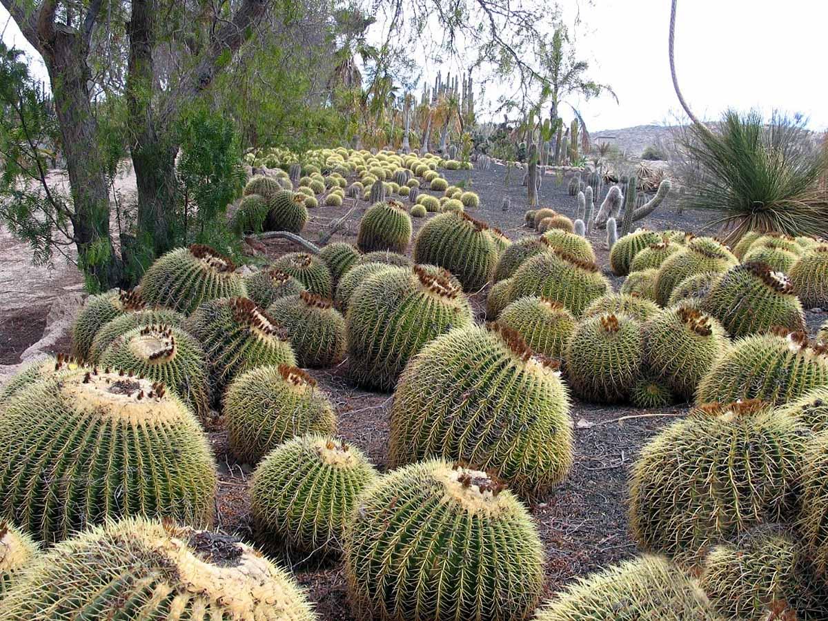 Cactus park, Exotic Park, Tenerife
