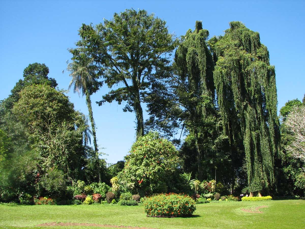 Королевский ботанический сад Перадении, Шри-Ланка