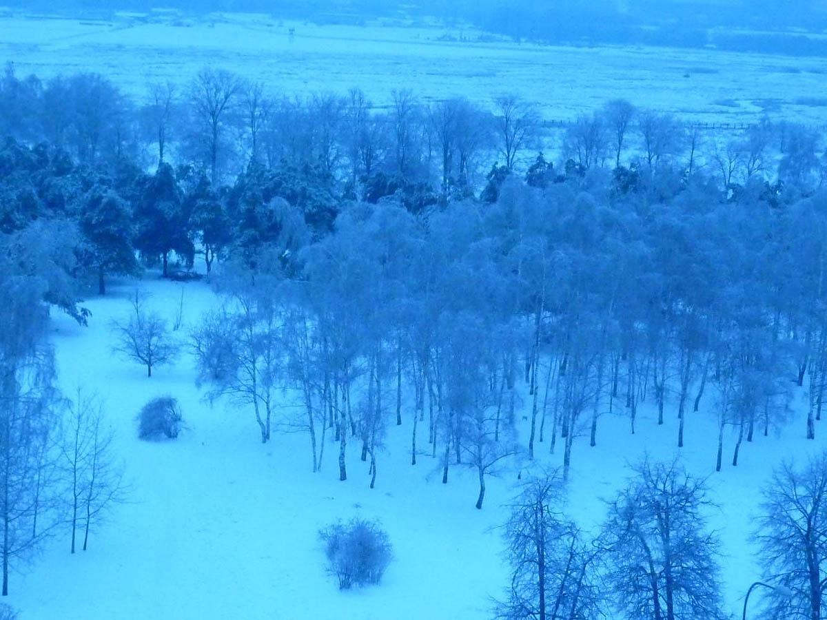 Москворецкий парк зимой