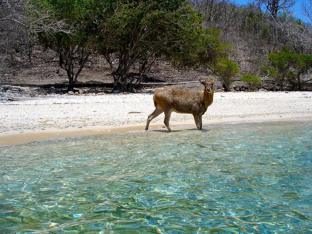 Национальный парк Бали Барат, Индонезия