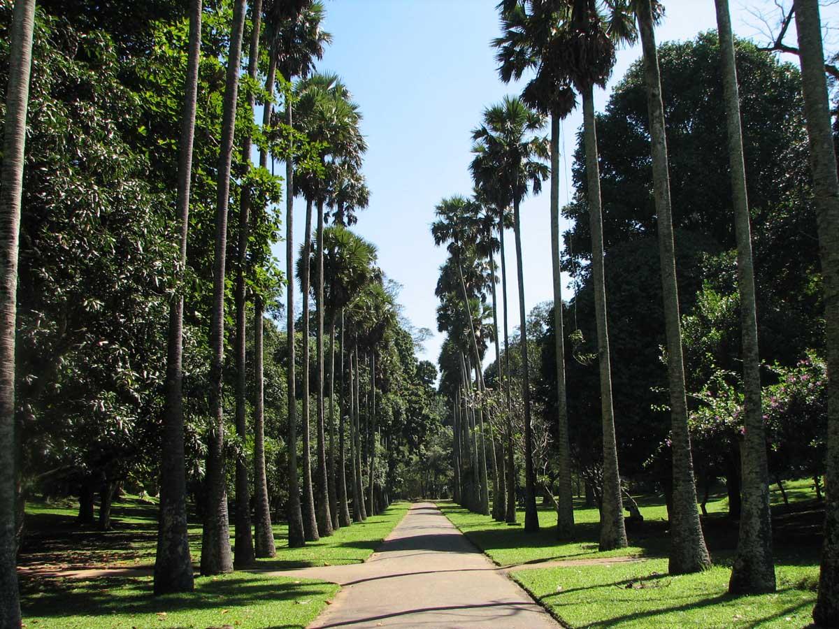 Peradeniya Royal Botanical Gardens, Sri-Lanka
