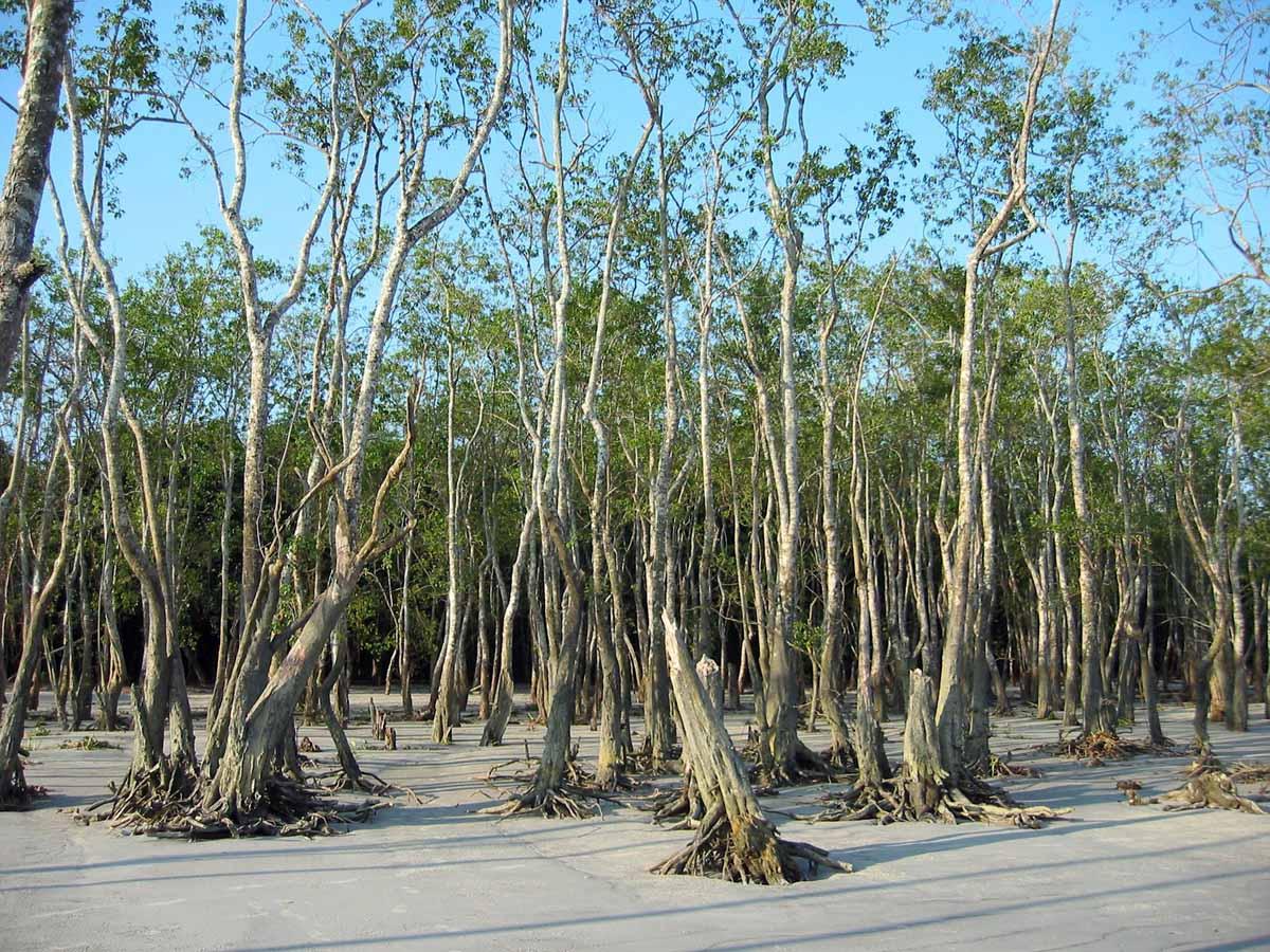 Sundarban, India