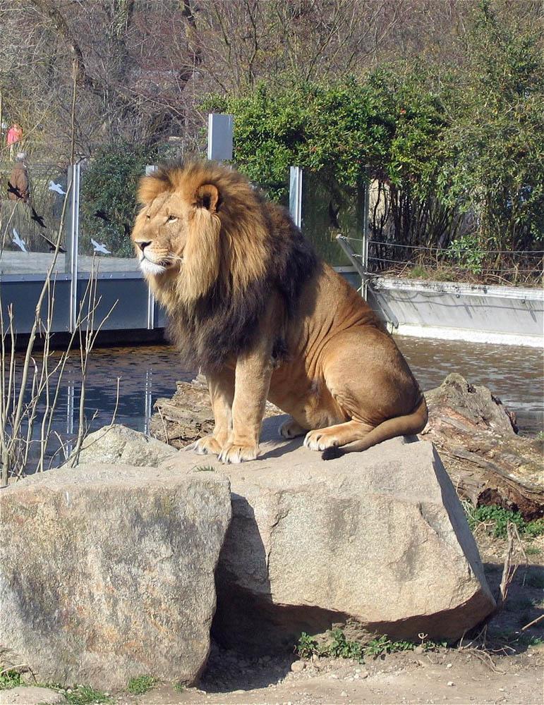 Tierpark Hellabrunn Muenchen