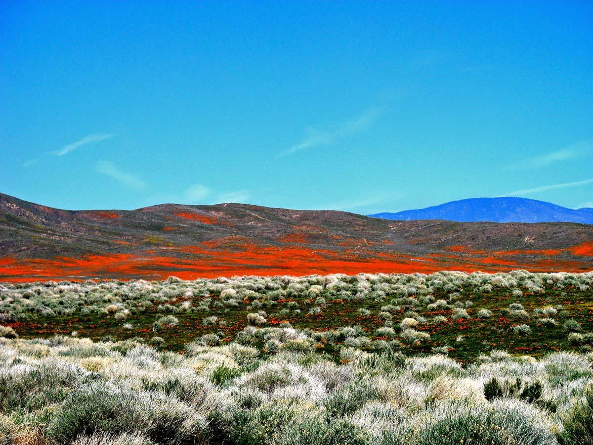 Заповедник Маков, Долина Антилопы, Калифорния
