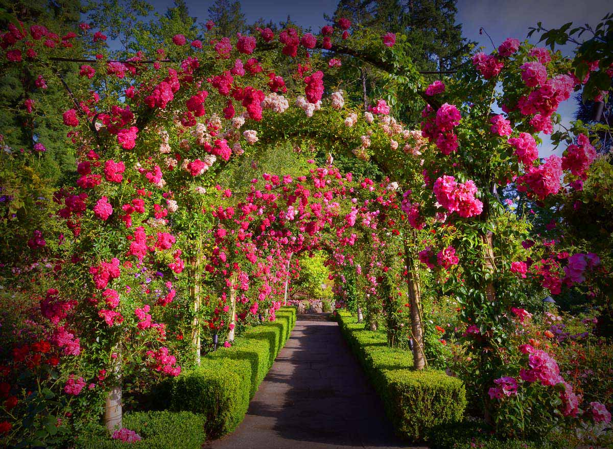 арка в саду Бутчартов