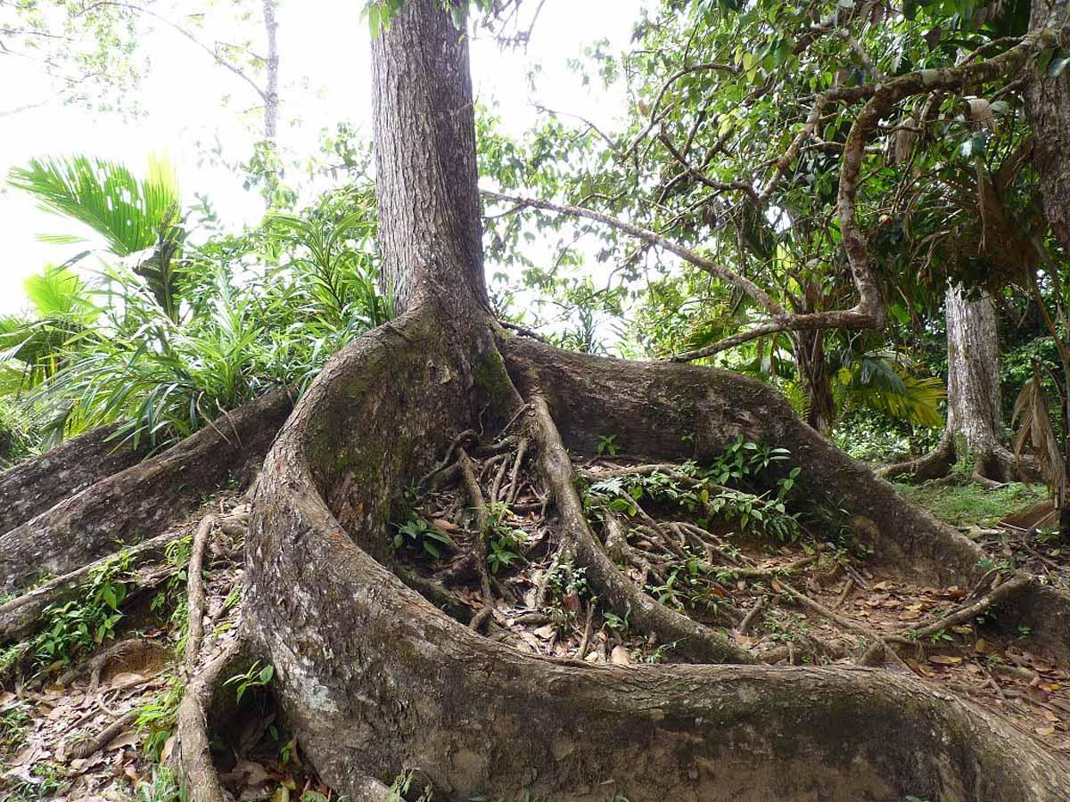 дерево в Мишен Лодж