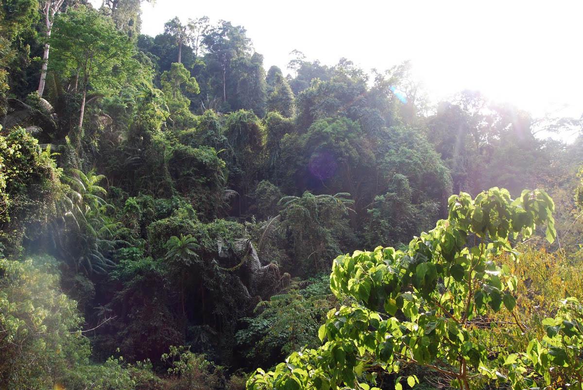 джунгли нацпарка Кхао Пханом Бенча