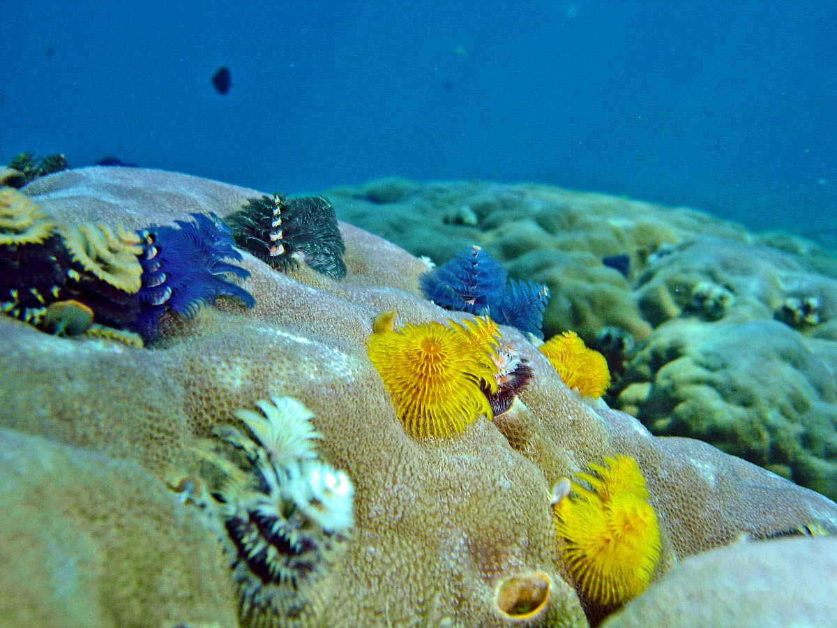 кораллы острова Реданг