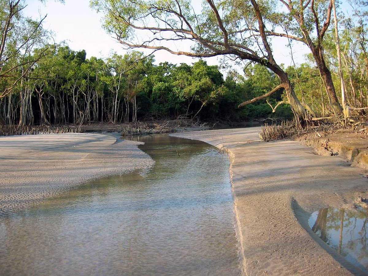 мангровый лес Сундарбан, Индия