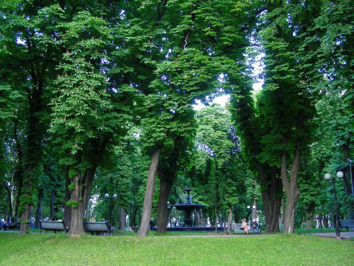 парки и скверы Киева