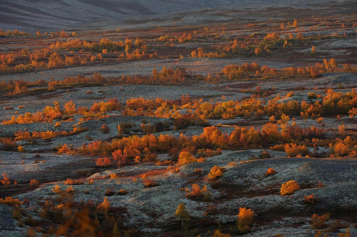 Национальный парк forollhogna в норвегии