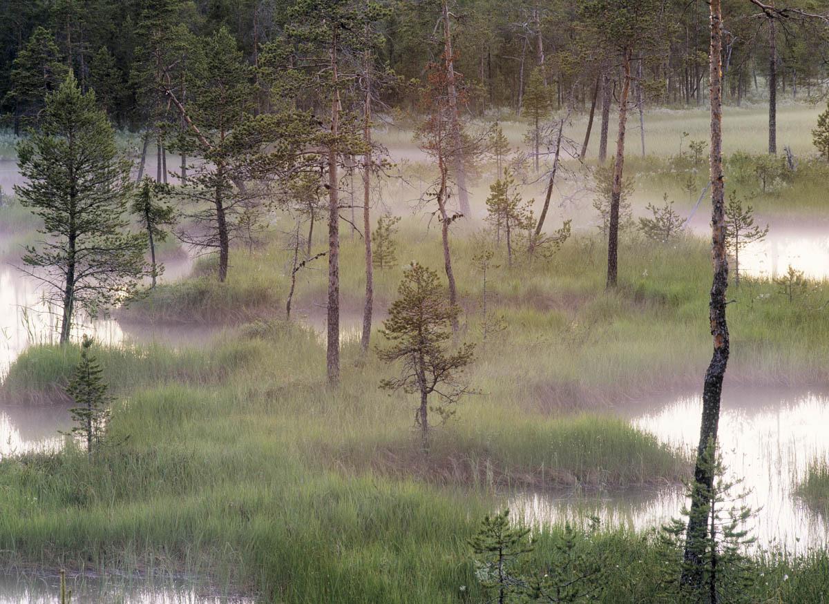 Национальный парк bjornlandet находится в