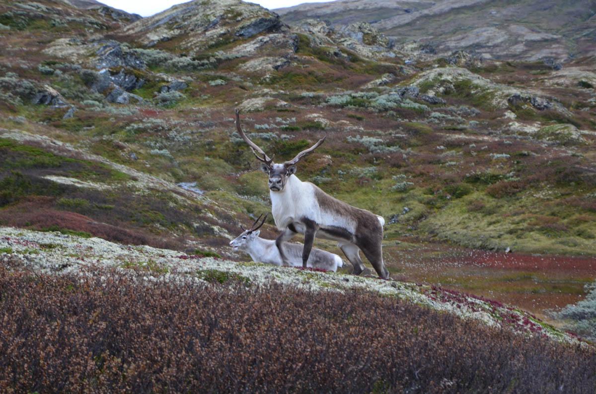 Национальный парк Forollhogna, Норвегия
