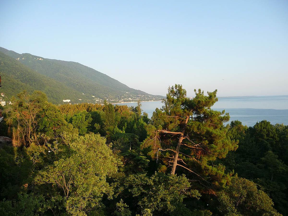 Пицундская роща в Абхазии