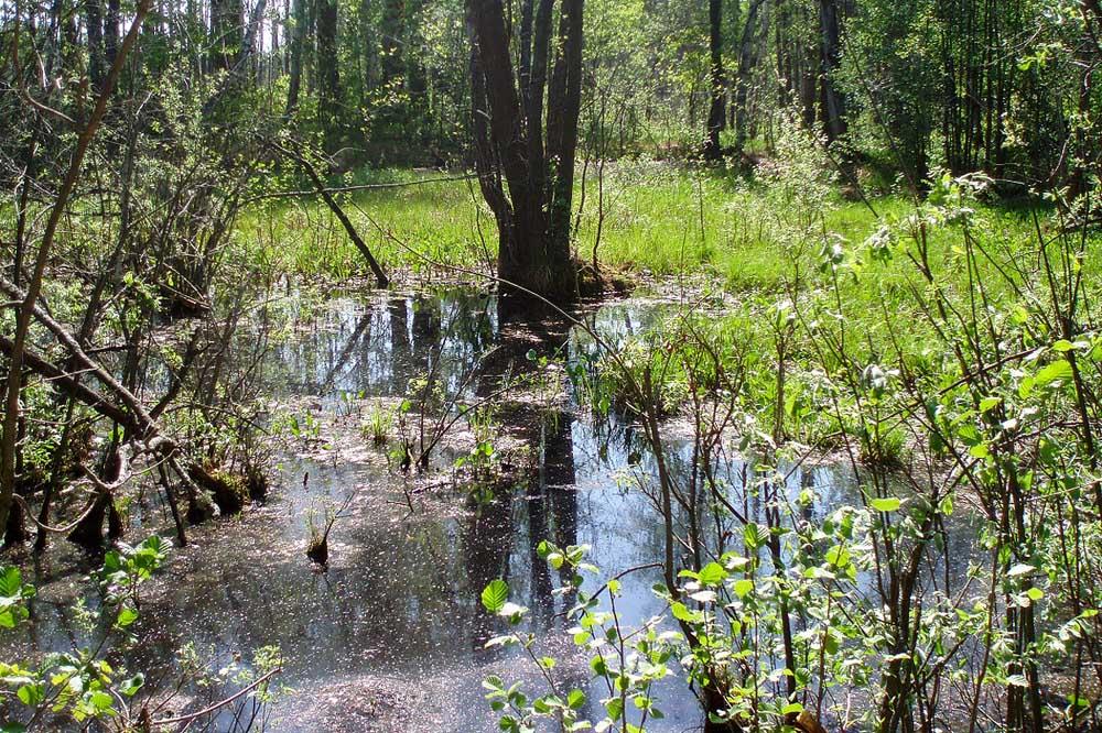 болото, район Полесково, Муромский заказник