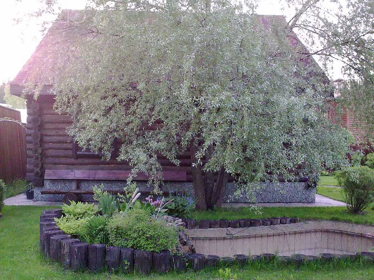 поселок Красновидово, Московская область, Россия