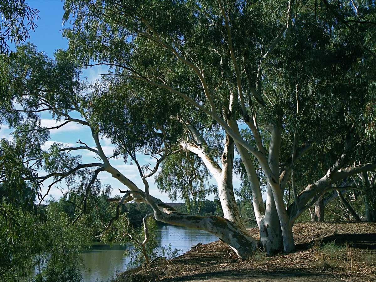 река Купер Крик в Квинсленде, Австралия