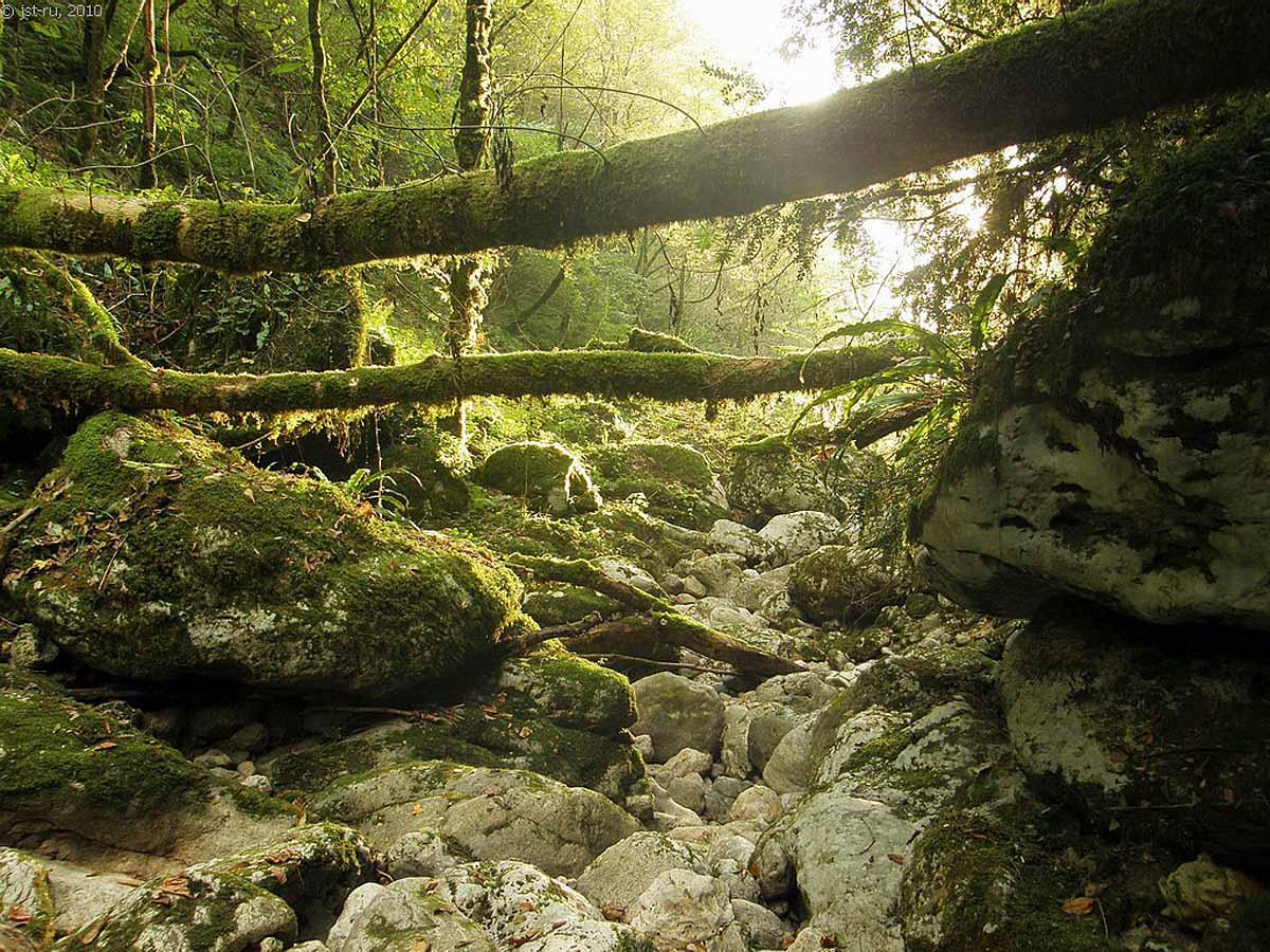 ущелье реки Цихерва, Гагра, Абхазия
