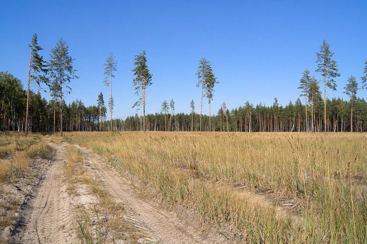 вырубка леса в Муромском заказнике