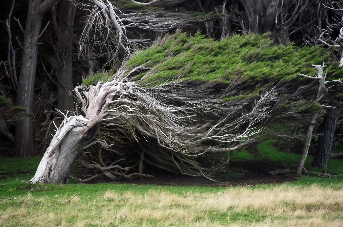 Наклонный лес в Новой Зеландии