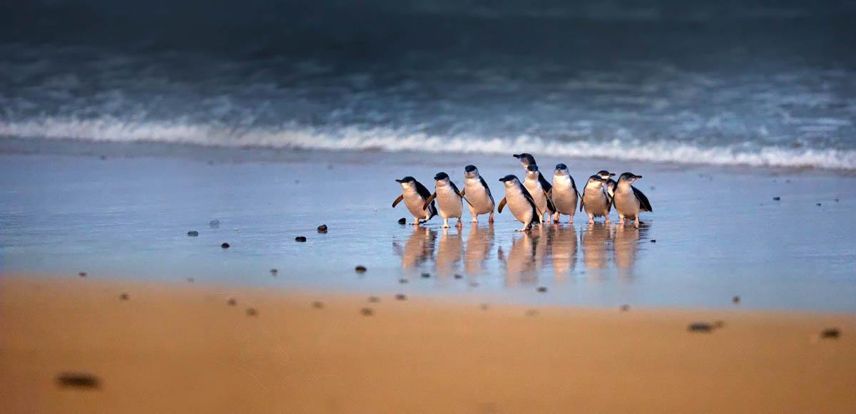 Phillip Island in Victoria, Australia