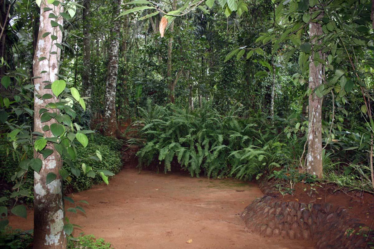 Сад Специй в Матале, Шри-Ланка