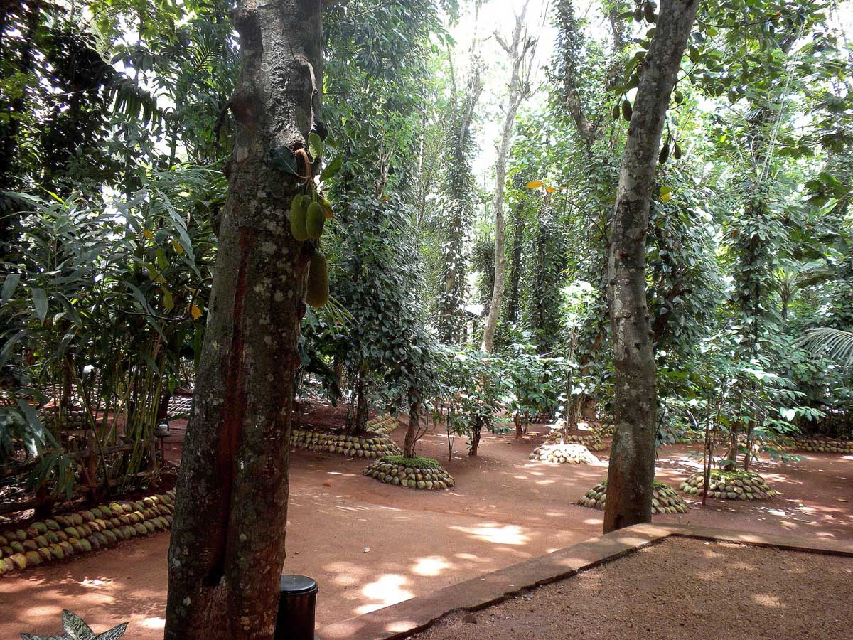 Spice garden, Matale, Sri-Lanka