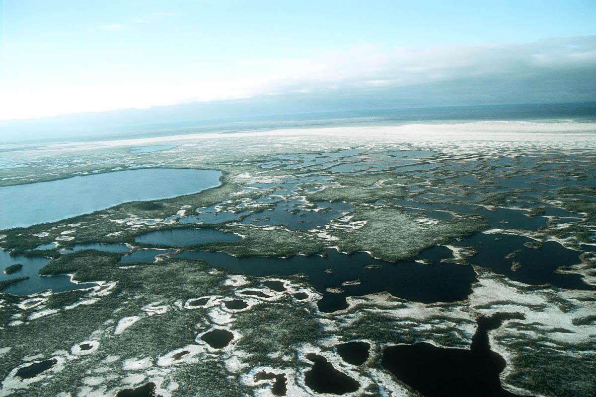 Васюганские болота зимой