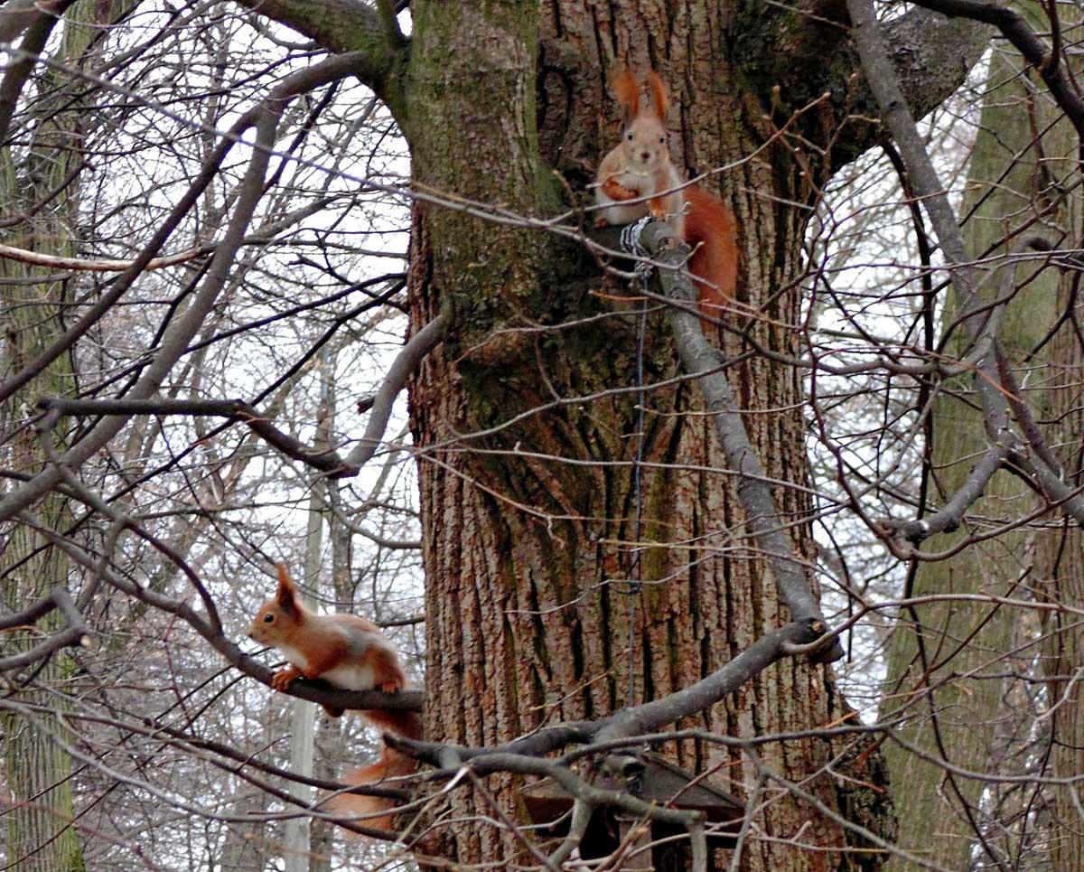 белки в парке Кинь-Грусть