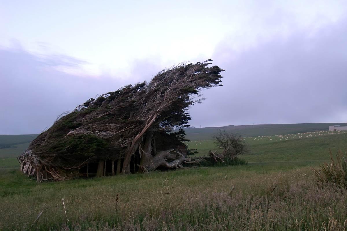 домик под Наклонным лесом Новой Зеландии