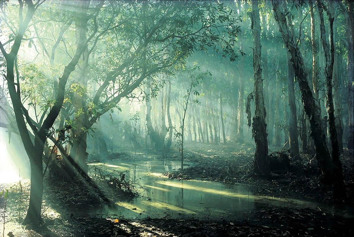 дождевой лес Дейнтри