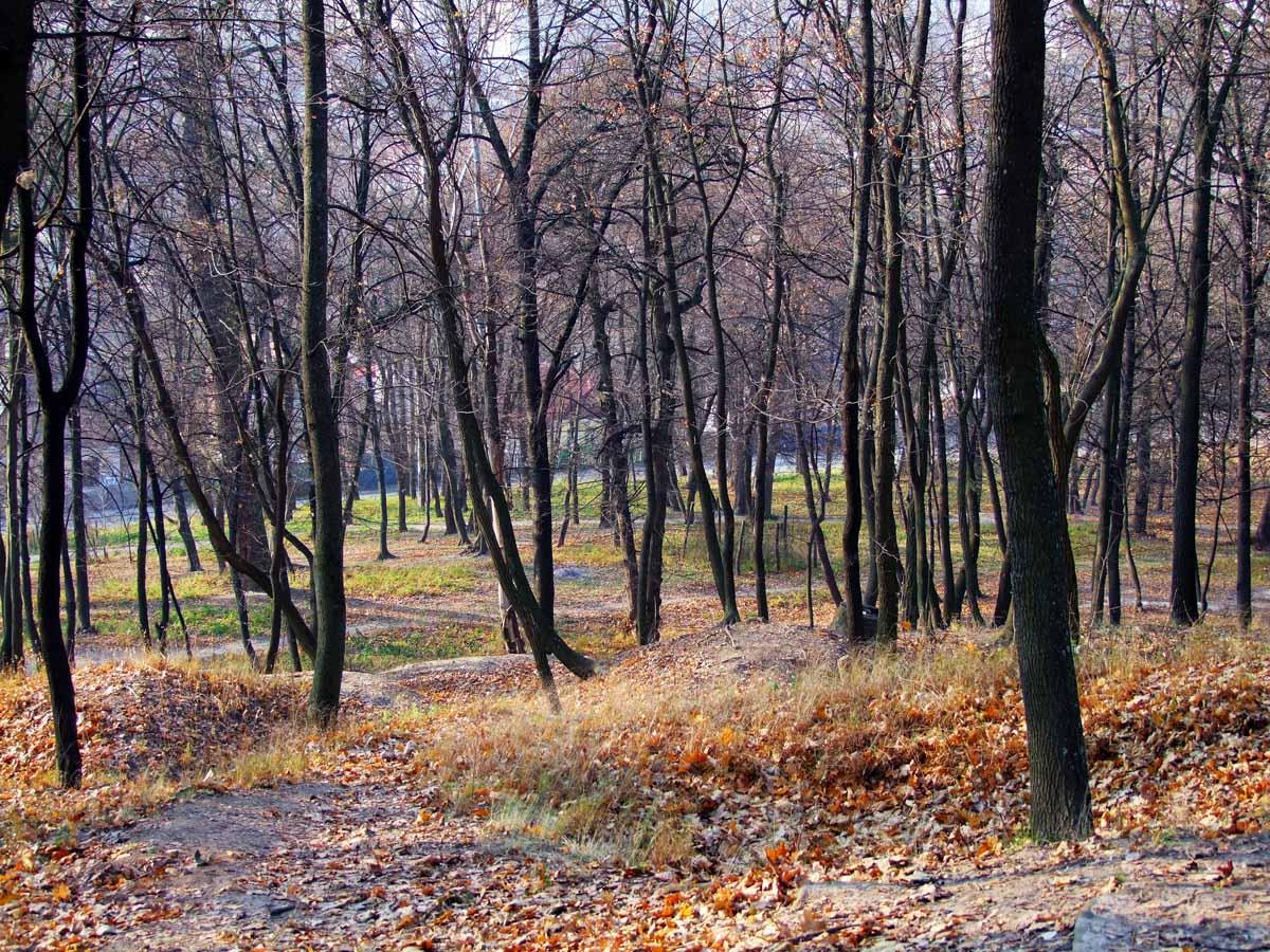 осень в парке Кинь-Грусть