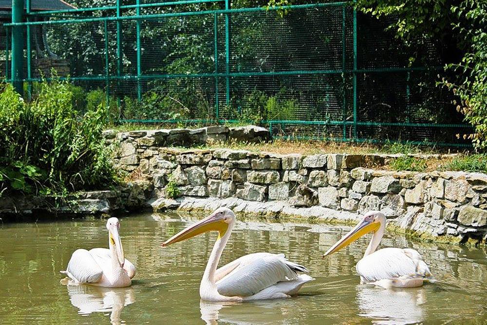 парк живой природы До-До в Анапе
