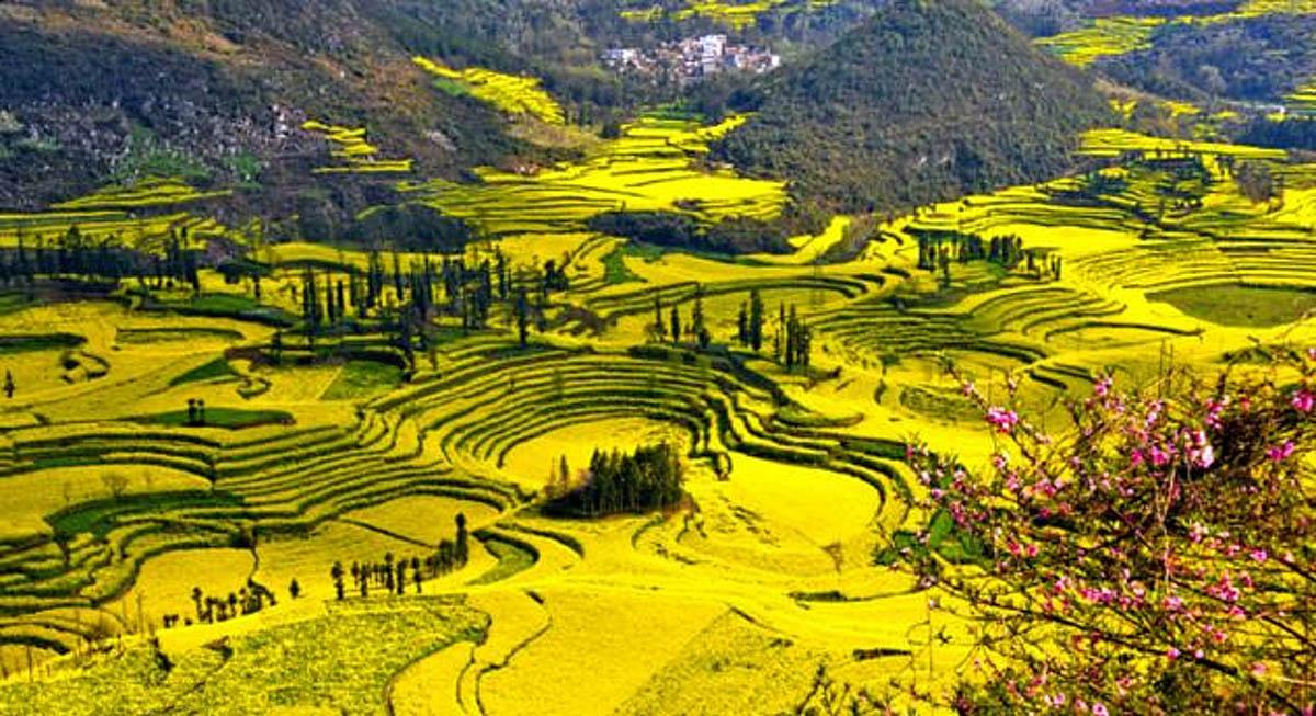 рапсовые поля Нюцзе, Люпинг, Китай