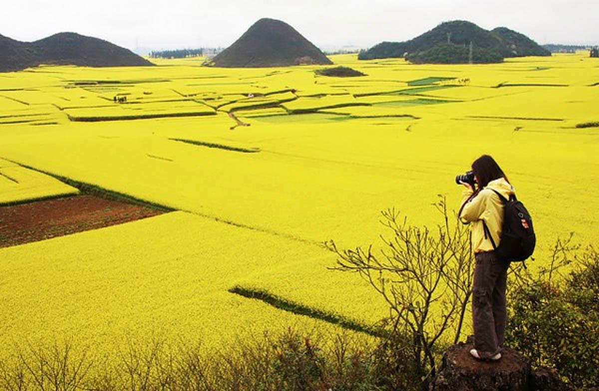 рапсовые поля Шивандашан, Люпинг, Китай