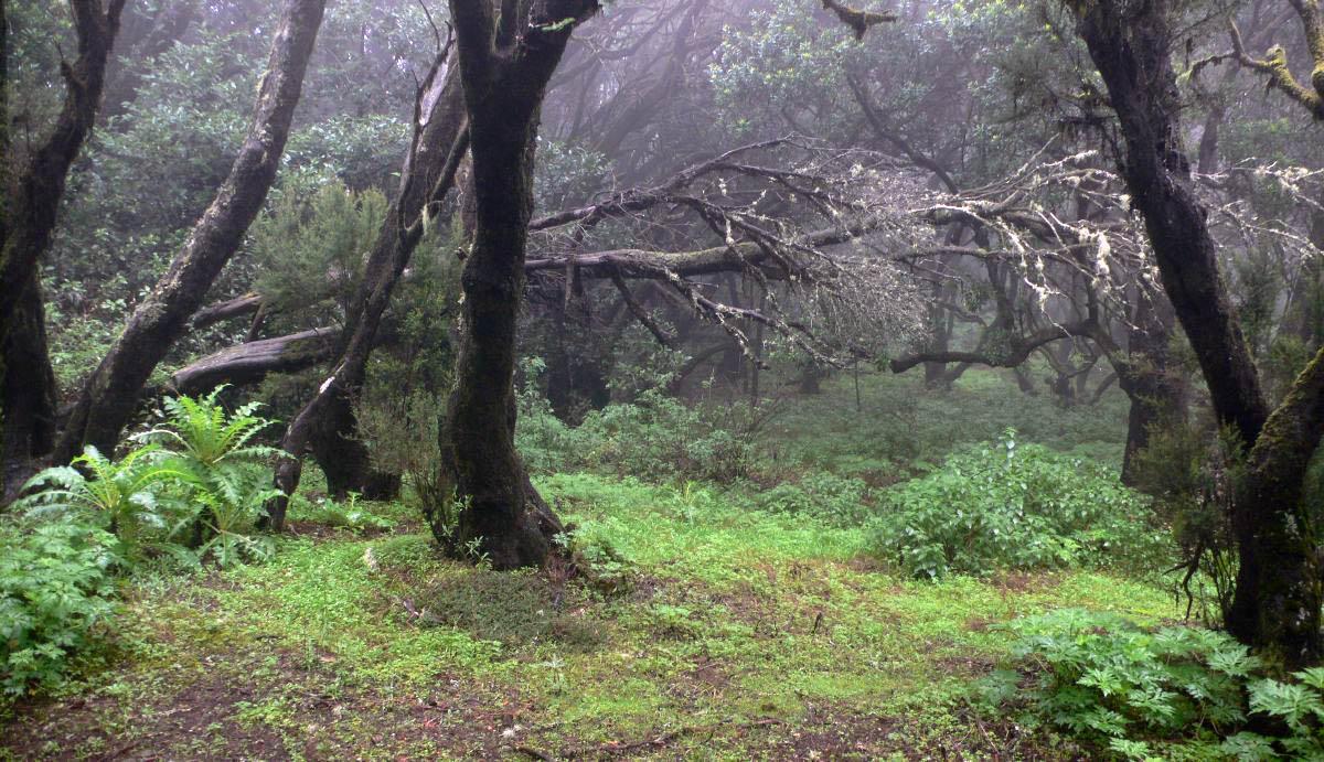 tropical forest La Gomera