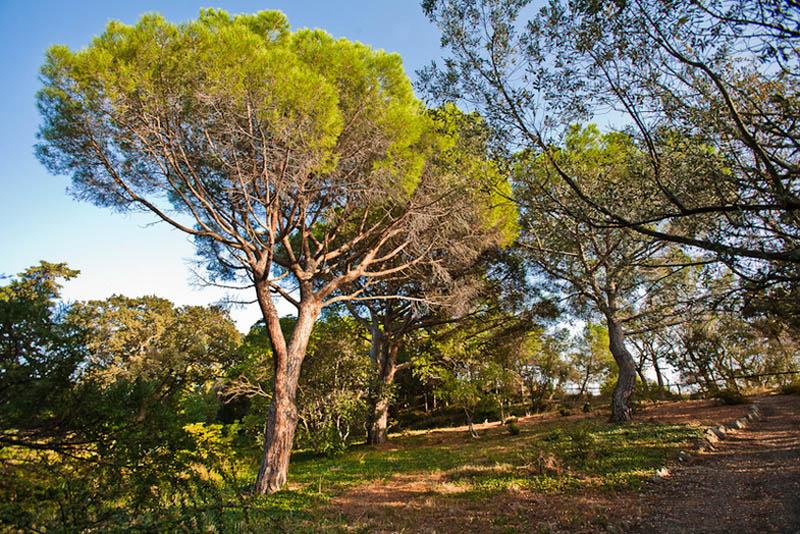 парк Монтедор в Ялте, Крым
