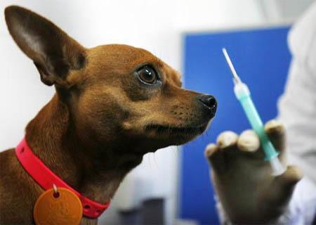 вакцинация собак и кошек