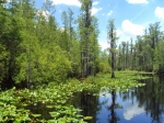 Okefenokee National Wildlife Refuge, Georgia, USA