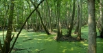 Okefenokee Swamp, Georgia State, USA