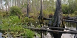 Okefenokee Swamp in Georgia State