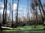 Национальный природный заповедник Окефеноки, штат Джорджия, США
