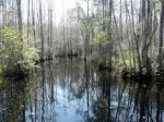 Национальный природный заповедник Окефеноки, Джорджия, США