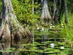 Национальный природный заповедник Окефеноки
