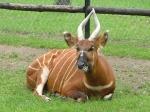 Варшавский зоопарк, Варшава, Польша