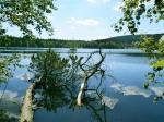 заповедник Славковский лес в Чехии