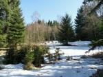 Славковский лес зимой